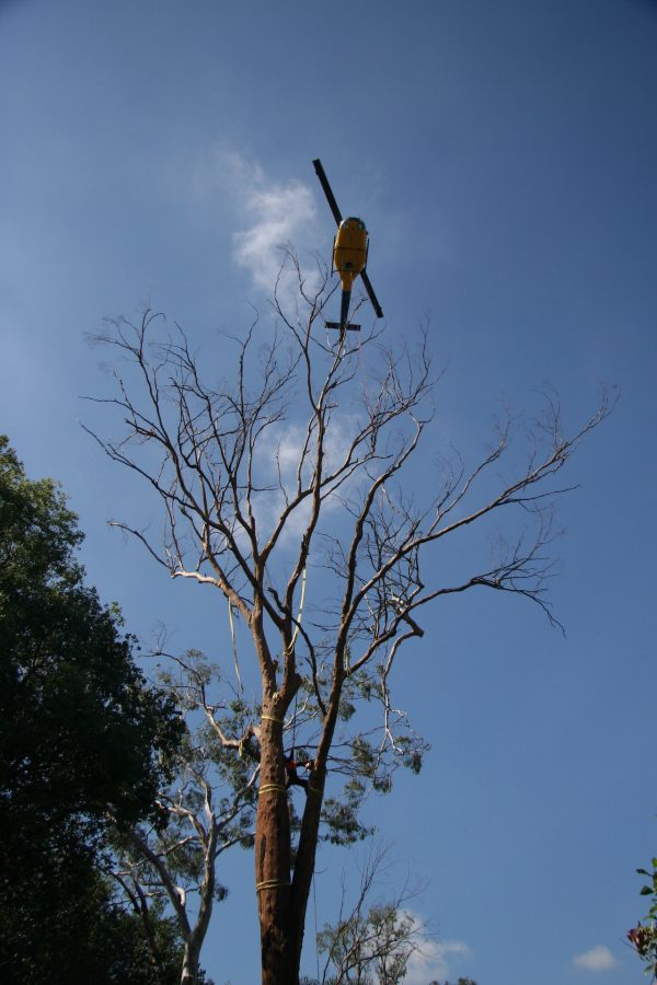 Bell 204 Heli-lift - Tree removal